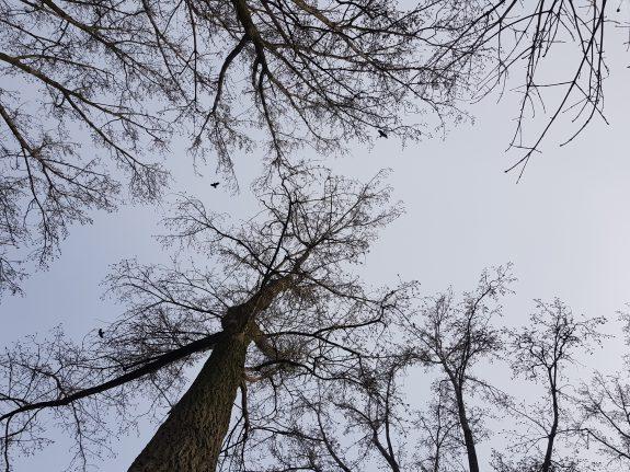 Robuuste bomen