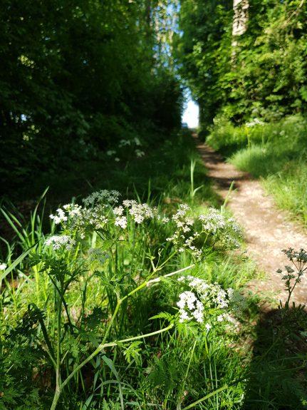 Het pad naar het hart van het Bos