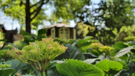 Het vitrinehuisje met hortensia
