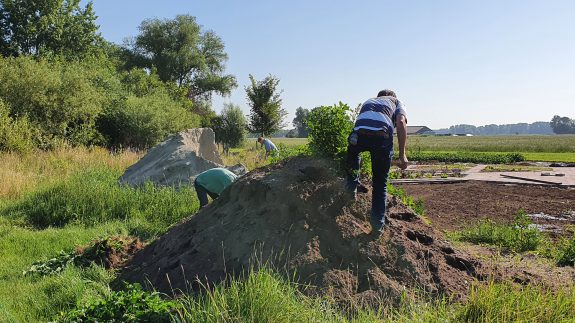 De hoop tuinaarde is begroeid met Melde, dat moet weg