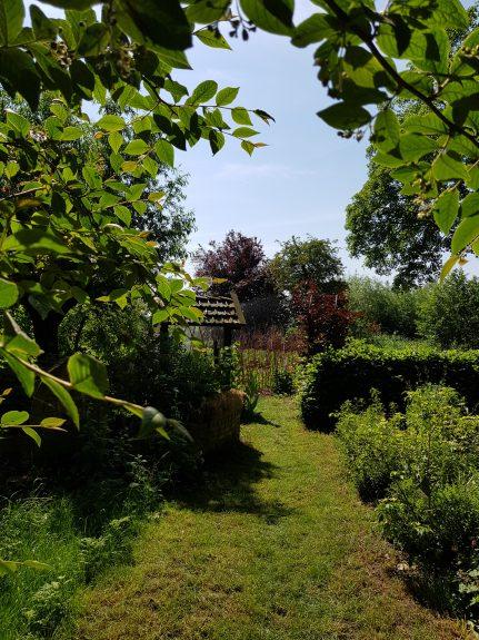 De Yellow appelboom midden achteraan