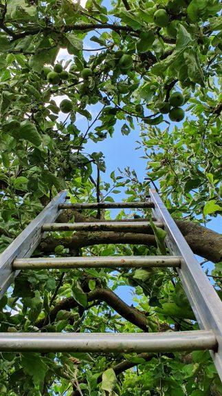 Ladder nodig