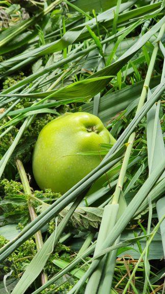 Mooie appel