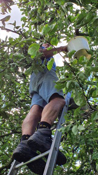 Jan op de ladder