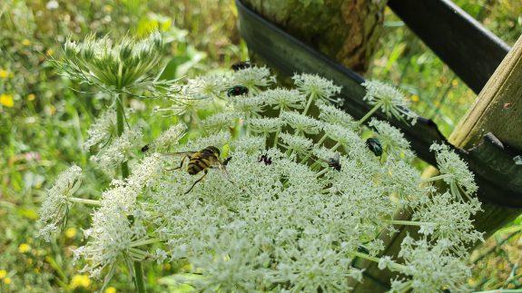 Geliefd bij insecten