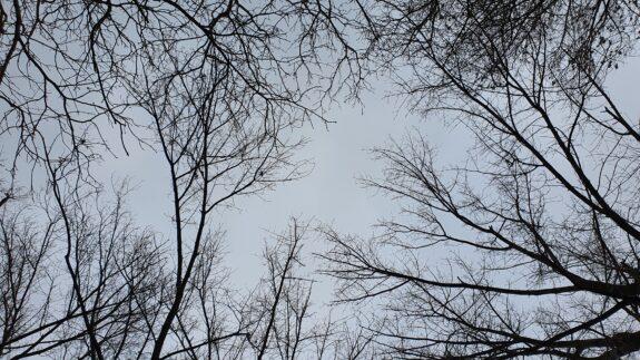 Boomkronen in het Bos