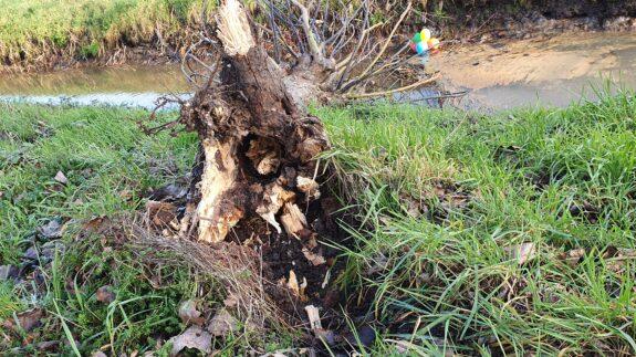 Kaspische zandwilg is gesneuveld