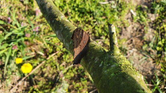 Een slaperige vlinder