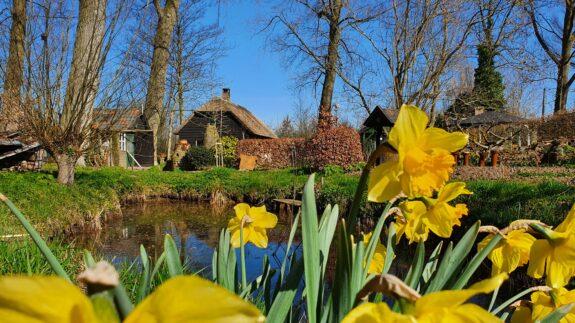 Voorjaar in het Duyls Bos