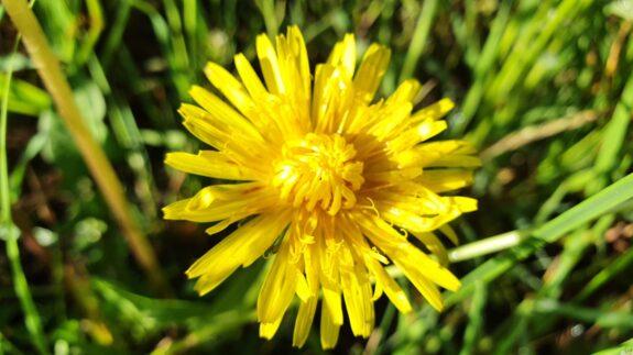 Stralend zonnetje in het gras
