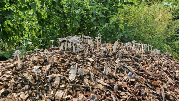 Begroeide berg houtsnippers
